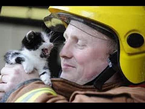 Jeder, der Tiere liebt, sollte sich dieses beeindruckende Video auf keinen Fall entgehen lassen.