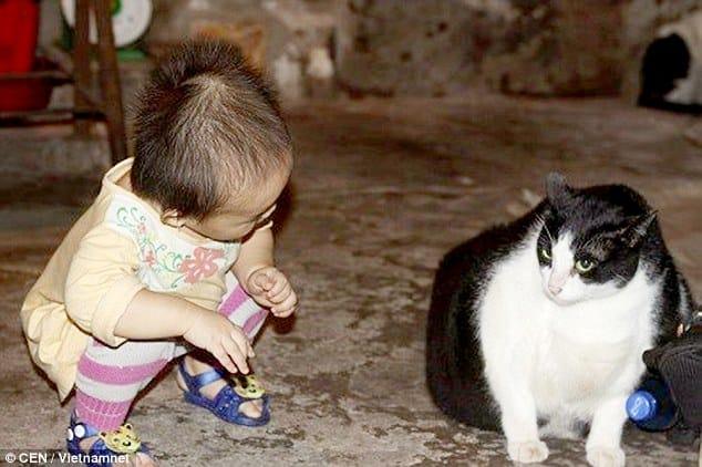Miu Wiegt 20kg Ist Das Die Fetteste Katze Der Welt Dex1info