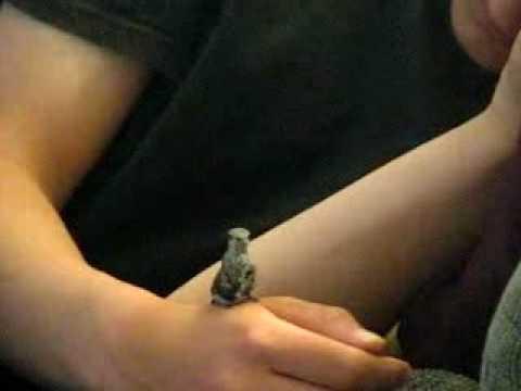Dieser Junge rettet einem Kolibri das Leben. Was danach passiert rührt mich zu Tränen.