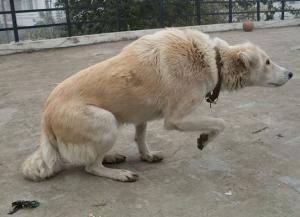 DRAFT_7_-_Wenn_dein_Hund_dir_in_die_Augen_sieht,_dann_will_er_damit_sagen..._.jpg