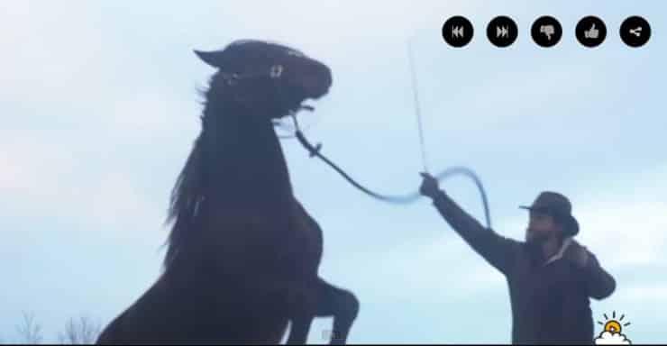 Sie_nannten_das_Pferd_ein_Monster,_doch_dann_geht_ein_Fremder_auf_das_Tier_zu._.jpg