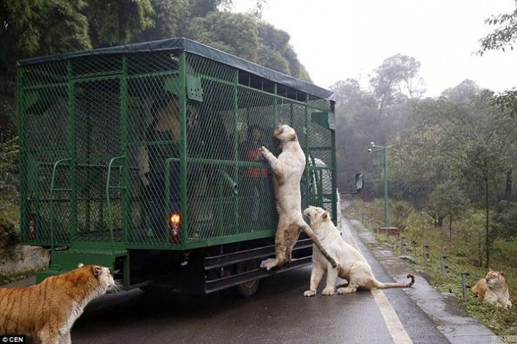 Dieser_Zoo_steckt_die_Besucher_in_Käfige!.jpg