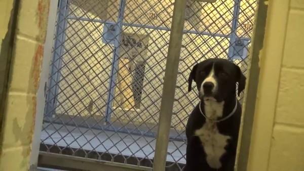 Dieser Tierheim-Hund zeigt die beste Reaktion, als er versteht, dass er adoptiert wurde.