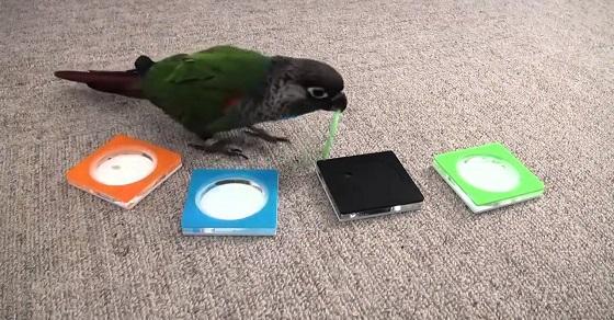 Wissenschaftler ließen einen Papagei einen IQ-Test für Menschen machen. Die Ergebnisse sind verblüffend!